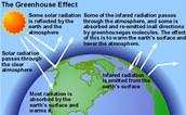 13. Explain the Greenhouse Effect.  How do the carbon cycle and the greenhouse effect go together?
