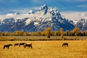 Horses in the Grand Tetons