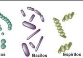 Tipos de bacterias.