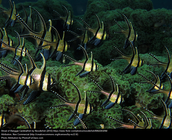 Many people doubt the beauty of the Banggai Cardinalfish...