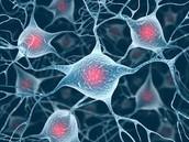 Brain Cells!