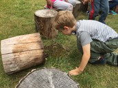 Preschoolers checking the stumps for any new discoveries.