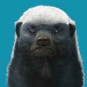 Intimidating Honey Badger