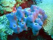 Phyla: Porifera