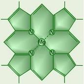 Chrlorophyll