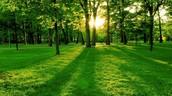 Provedite svaku nedelju u šumi