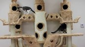Medium Cat home for the Normal cats $45.00