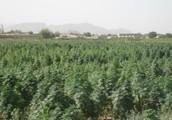 Where Does Marijuana go When you Smoke it