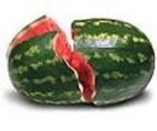 Smashing watermelon
