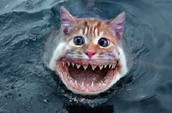 Fishcat Research Team