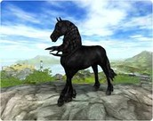 The Friesian Horse Gallery