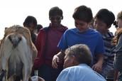 Milking a Goat!