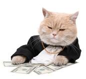 Fat Money Cat