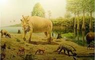 Mammals chilling