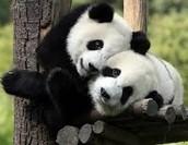 A Pandas Ecosystem