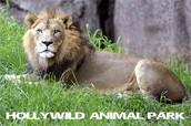 Hollywood Animal Park
