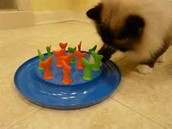 Go Fish Cat Toy...