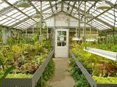 What a Greenhouse Looks Like