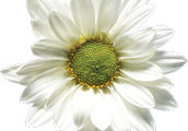Homoeopathy is natural, safe and Effective