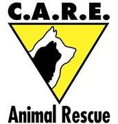 Castaway Animal Rescue Effort