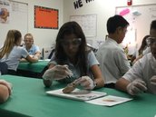 Audrey carefully dissects a sheep brain!