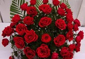 Florist in India | Same Day Fresh Flowers Delivery in India