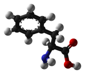 What is Phenylalanine? Maggie
