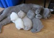 Kitten gradient
