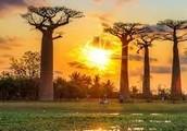 Madagascar: The Island!