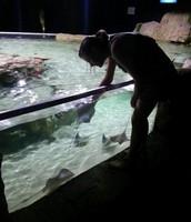Petting A Stingray @ Austin Aquarium