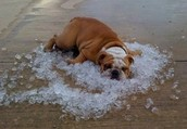 Wednesday, July 24th is beat the heat day!