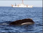 http://www.professionalmariner.com/October-November-2013/whale-zones/