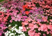 Miss Maudie's Garden