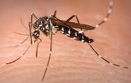 How malaria is tranferred