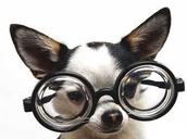 nerdy doggy