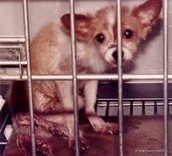 Did this cute little puppy deserve to get caged  up and starve to death?