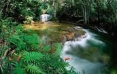 (A)Tropisch regenwoudklimaat