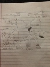Food web of forest biome