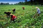 Farming China