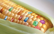 Why labeling of GMOs is actually bad for people and the environment
