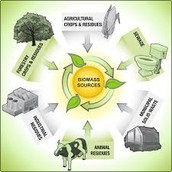 Fun facts about biomass