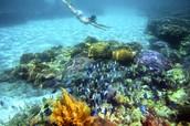 ✓ Visit Aldabra  Coral Reef