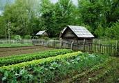 Compost and Garden simultaneously: Lasagna Gardening