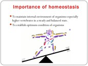 What I know about homeostasis.