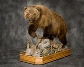 History of Taxidermy