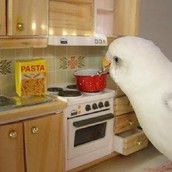 Bird Making Pasta