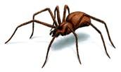 The Scientific Classification: Spiders