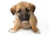 my cute little puppy