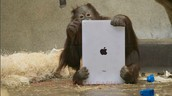 Orangutan Apes Using iPads
