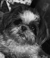 black mi dog